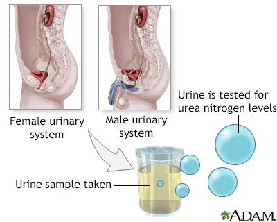 Nitrogen test