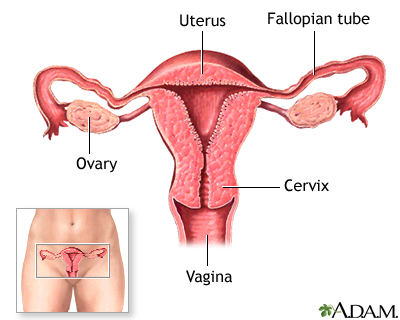 Normal female anatomy