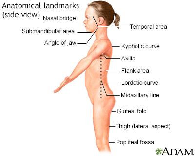 Anatomical landmarks, side view