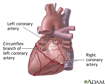 Posterior heart arteries