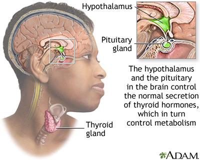 Brain-thyroid link