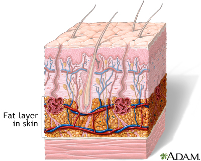 Fat layer in skin