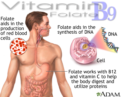 Vitamin B9 benefits