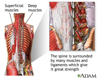 Spine supporting structures