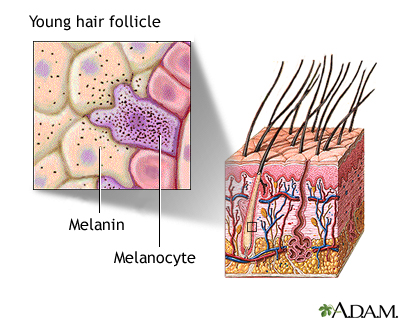 Hair follicle of young person