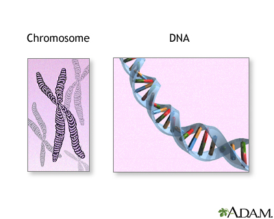 Chromosomes and DNA