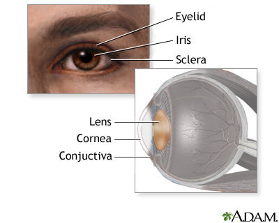Eye lens anatomy