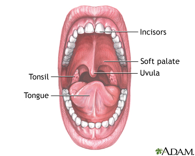 Mouth anatomy