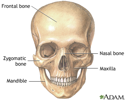 Skull anatomy