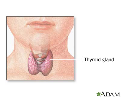 Child thyroid anatomy