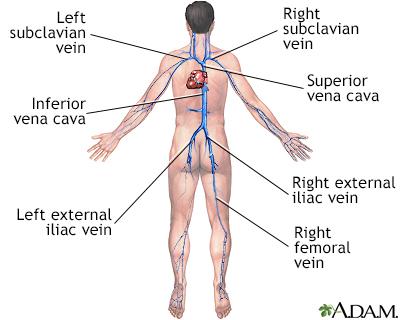 Deep veins