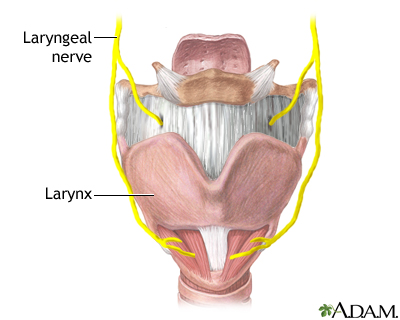 Laryngeal nerve damage