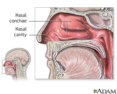 Nasal anatomy