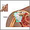 Rotator cuff repair - series