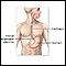 Upper gastrointestinal system
